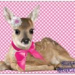 Janey bambi ansichtkaart
