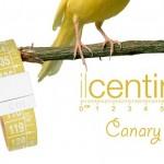 Il Centimetro armband Canary Islands - Pintz.nl
