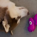Eko-Pets speeltje