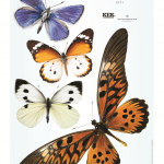 Interieurstickers Big Butterflies - complete set - KEK Amsterdam