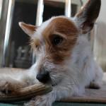 Green and Wilds - hond kauwt op hertengewei - DuDier