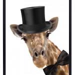 Poster Giraf - nieuwe collectie van Zoedt