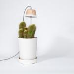 ledlamp voor (kruiden) planten - By Paula Rutgers Design