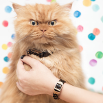 FriendshipCollar - Dotty Moggy - Lifestyle - eko4petz.nl