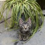 Cats Only biedt katten een welverdiende vakantie