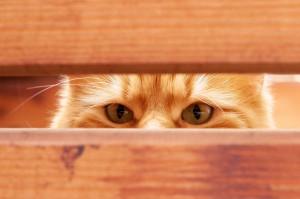365 dagen per jaar Dierendag bij Cats Only Kattenhotel & Katsalon