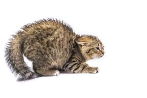 Gedragstherapie voor katten; voor gelukkige katten én baasjes