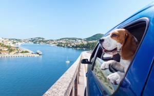 The Dog Pen brengt hondenliefhebbers en hondenbloggers samen