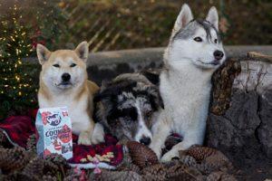 Cadeautip voor de feestdagen: het Kerstproof hondenkoekje van Smoofl