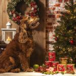 Edgard en Cooper kerstmenu voor honden - eko4petz.nl