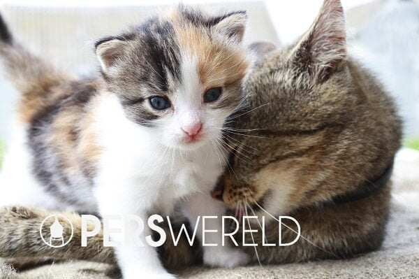 katenveertjes-kittenpakket-3