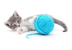 katenveertjes-kittenpakket-website
