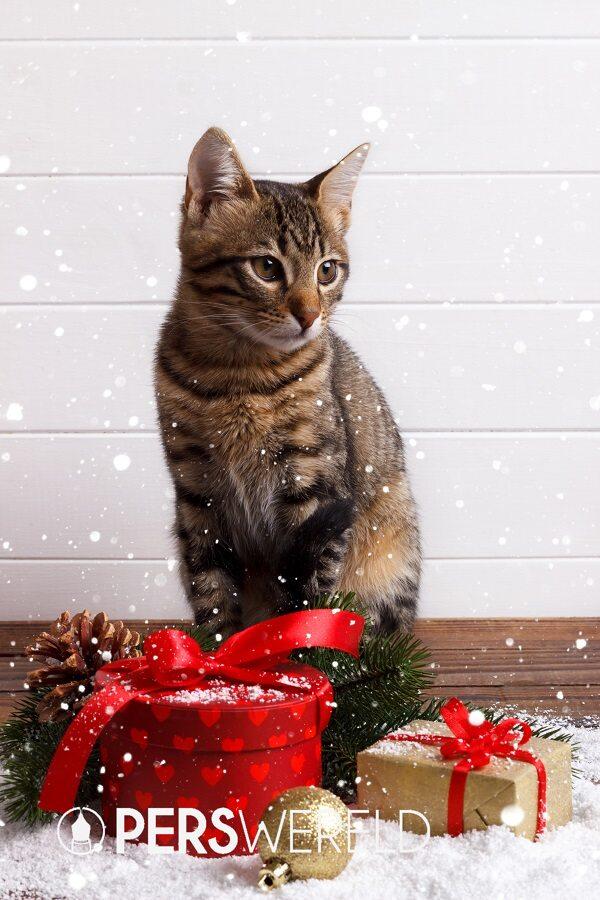kattenveertjes-mystery-kerstpakket-3
