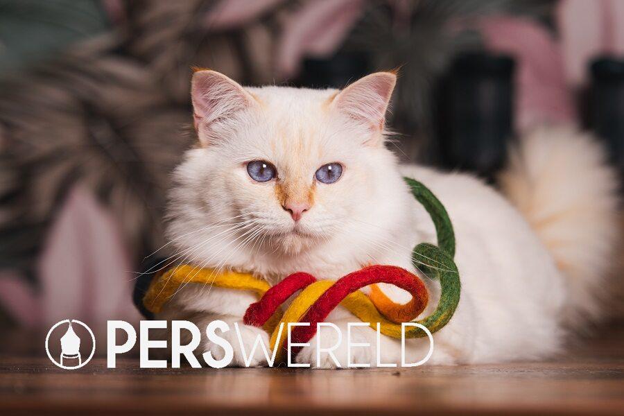 kattenveertjes-mystery-kerstpakket-5